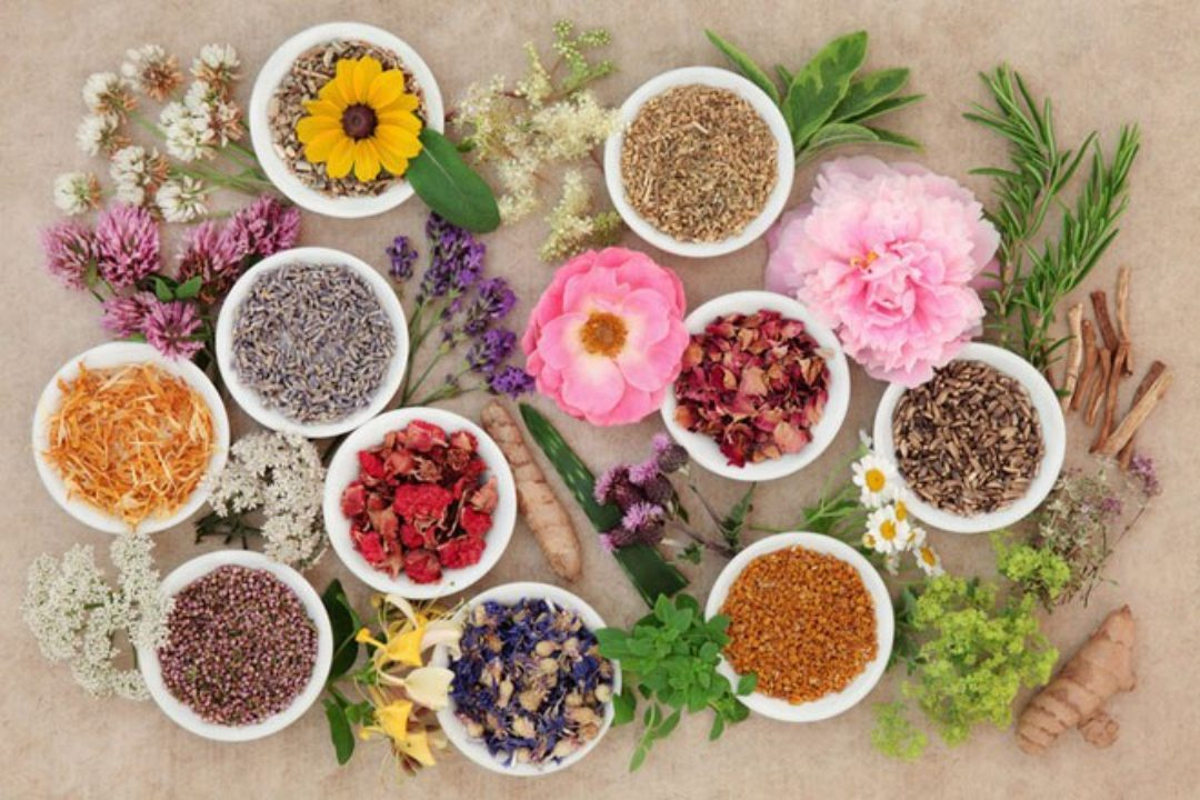 healing-flowers-and-herbs_170715_154634