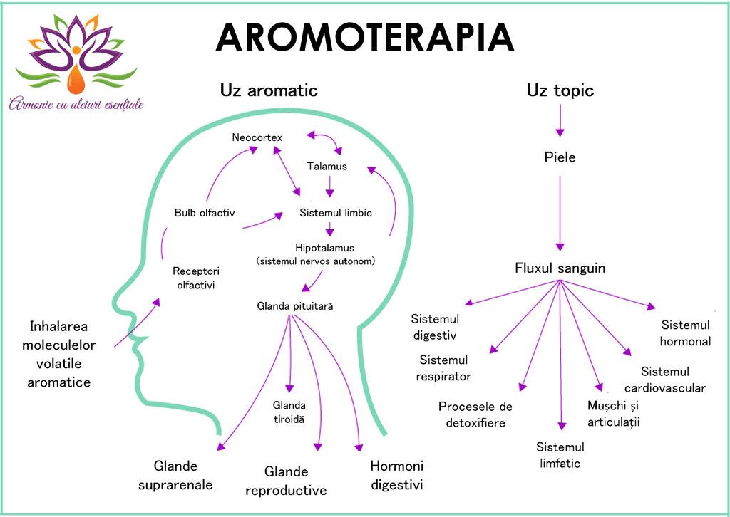 Aromoterapia - cum actioneaza