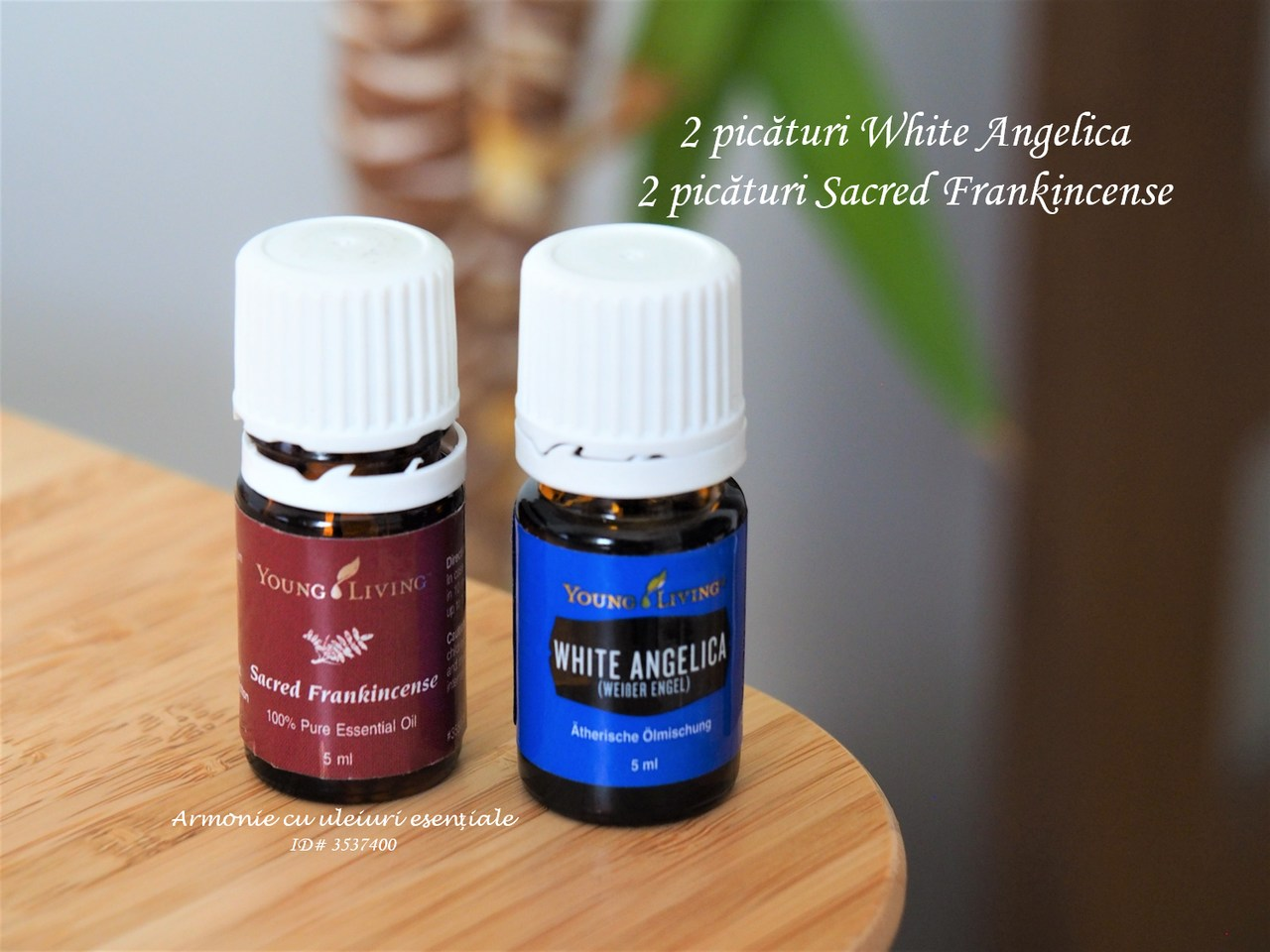 Sacred Frankincense si White Angelica_resized