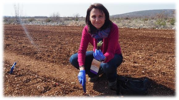 YL Croatia_Helichrysum farm