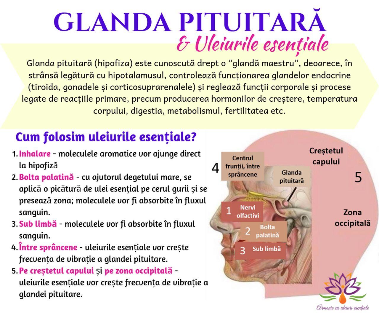 Glanda pituitara si uleiurile esentiale_resized