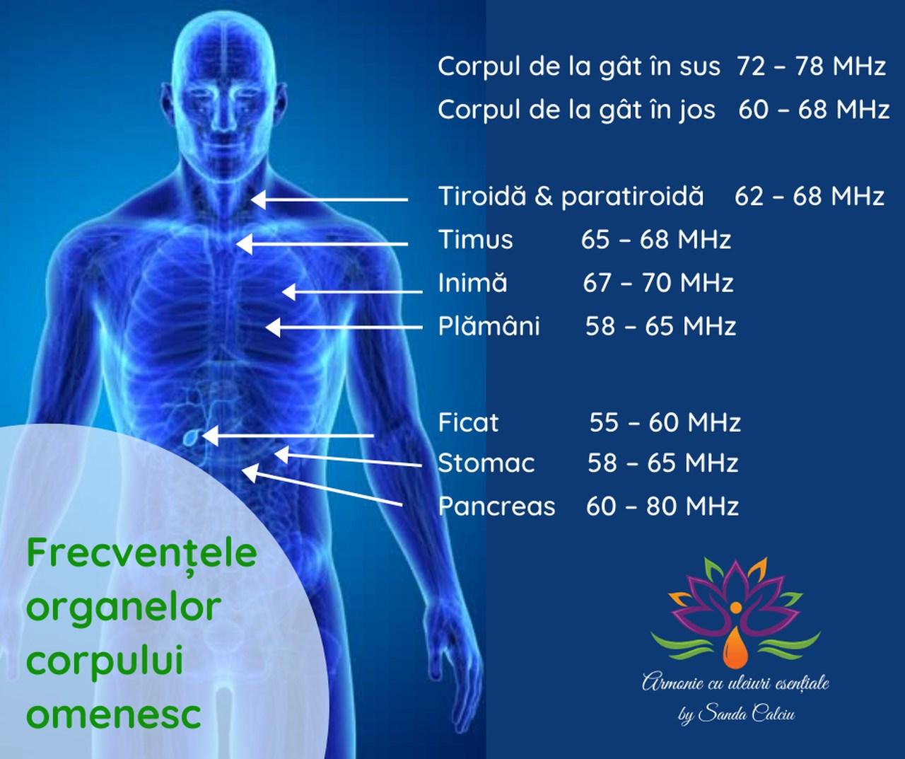 Frecventa organelor corpului omenesc_resized