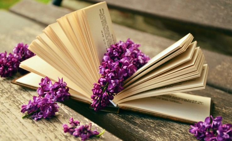 blossom-book-read-flower-purple-petal-974863-pxhere.com (3)